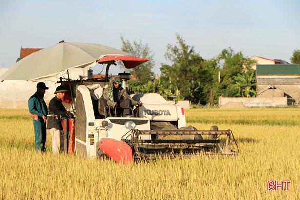 Mới đầu tháng 8, lúa đã chín, rơm đã thơm nồng ngát cả làng quê!